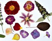 Pressed Flowers - Real Pressed Flowers - Dried Flowers - Dried Pressed Flowers - Real Pressed Dried Flowers - Pressed Flower Art - Floral