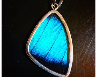 Real Butterfly Wing Jewelry Sterling Silver Pendant Necklace Morpho Deidamia XL WING XxON SALExX