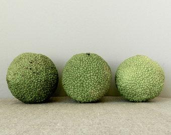 Green Natural Home Decor, Hedge Apple Still Life Photography, Minimalist Art, Lime Green Tan Art, Nature Photography, Spring Green Art Print