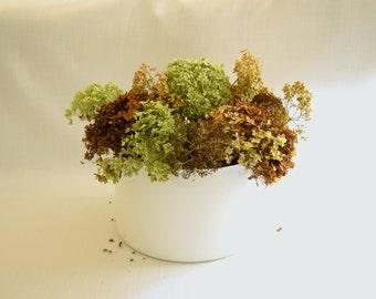 Vintage Enamelware Pot . Black and White Enamel Ware Bucket . Antique Pail . Garden Decor . Home Decor