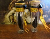 Raven  Feather Specimen Your Choice of Custom # dollhouse miniature, witch, wizard, sorcerer, spooky, labratory in 1/12 scale