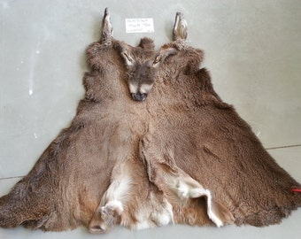 Average Whitetail Buck Cape- Taxidermy Quality- Wet Tanned Lot No. 1500536R