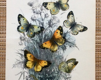 Beautiful Victorian Butterfly Print, R