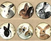 Stickers, Rabbits, Sticker Seals, Rabbit Stickers, Bunny Stickers, Party Favors