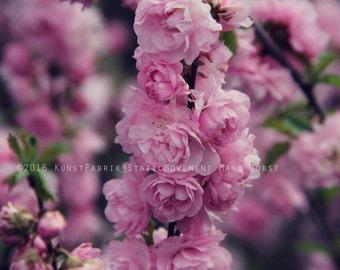 PINK SPRING Original Color Fine Art Nature Blossom Flower Photograph