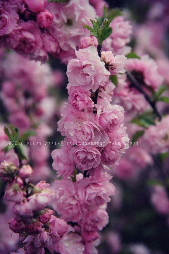 Pink Spring Original Color Fine Art Nature Blossom Flower
