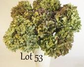 Dried Hydrangeas 6 Green, Blue-Green, Lavender - Wedding - Organic- Crafts