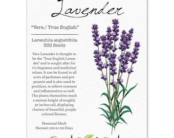 Lavender Seeds, Vera / True English (Lavandula angustifolia) Non-GMO Seeds by Seed Needs
