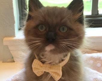 Lemon Yellow and White Seersucker Break Away Bowtie Collar for Cats