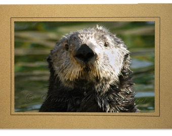 Sea Otter Card Blank Inside - Otter Cards - Sea Otter Photography - Otter Art - Otter Birthday Card - Blank Sea Otter Cards