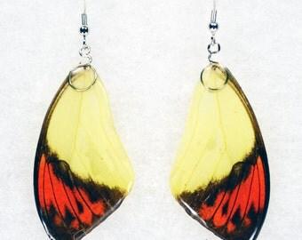Real Butterfly Earrings - Great Orange Tip - Hand Cast Resin
