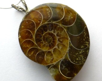 Ammonite Fossil Pendant Bead AAA Quality Sterling Silver Bail 925 Sphenodiscus Miniature Necklace Jewelry Cabochon Focal One of a Kind Rare