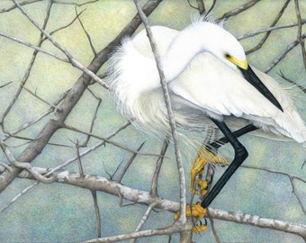 Snowy Egret/Giclee/Print/Colored pencil/Birds/Pastel colors/Wildlife/Nature/Shorebirds