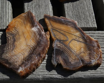 U- Pick hells canyon petrified wood slabs for lapidary or cabochon cutting