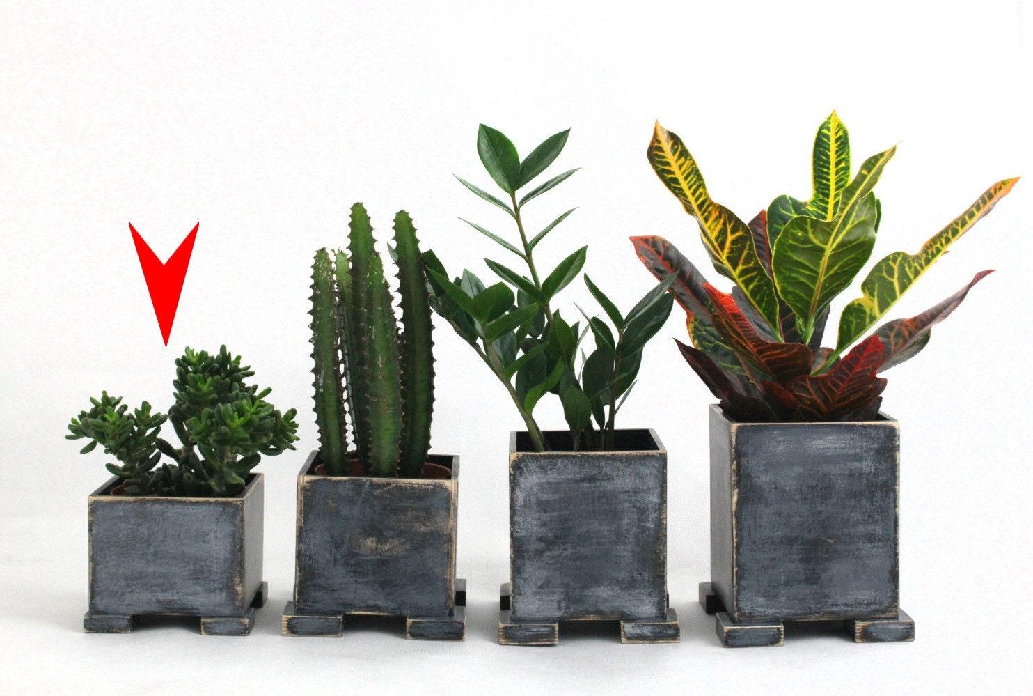 Wooden Herb Planter Windowsill Flowerpot Box For Herbs