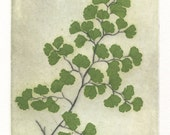 Maidenhair Fern, Original Fine Art Etching