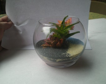 AVAILIABLE NOW...Living Succulent Snifter Terrarium
