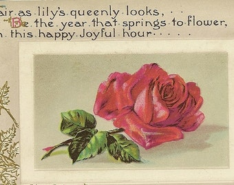 Elegant Vintage Postcard Red Rose Birthday Postcard ~ Fair as Lily's Queenly Looks – Winsch Back Card
