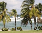 Palm Tree Print - Island Photography - Beach Photograph - Tropical Home Decor - Caribbean Travel Photography - Barbados Photo - Blue Green