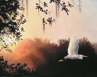 Snowy Egret 11 x 17 print (image 8.25 x 16.5) personally signed by artist RUSTY RUST / E-42-P