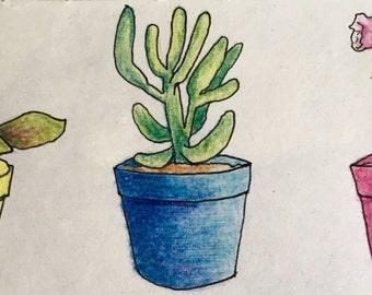 Original Colored Pencil Succulents - 4x8