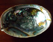 """Abalone Shell - LG 5""""+ sage burner, ash catcher, house blessings, smudge supply, smudging, energy clearing, Wiccan, Native American"""