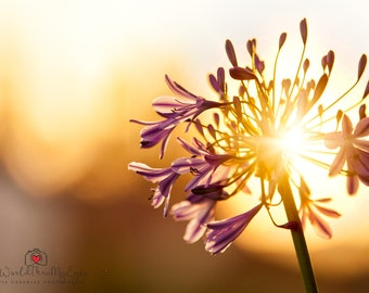 Nature Photography Sunset  Photography flower photography Abstract Photography Surreal Fine Art Photography Print