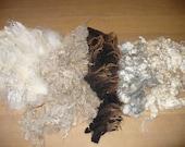 Raw Wool Fleece Sampler 5 sheep breeds Spinning Felting Wool Variegated Color Fiber