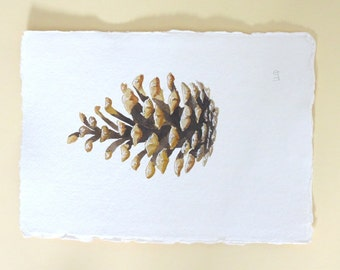 Original pine cone watercolour painting illustration