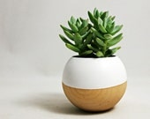 Sphere Succulent Air Plant Planter // White + Wood