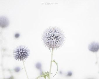 Purple Print or Canvas Wrap, White Modern Flower Art, Purple Allium Bulbs, Bright Flower Pictures, Purple Nursery Decor, Nature Photographs.