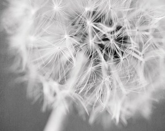 Modern Art, Black and White Print or Canvas Art, Vertical Wall Art, Dandelion Art, Silver, White, Cream, Grey, Bathroom Decor, Bedroom.