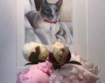 Pet Portrait colores pencil drawing