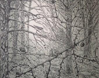 NIghtjar etching by Flora McLachlan, larch trees, forest, wood, birds singing, original print
