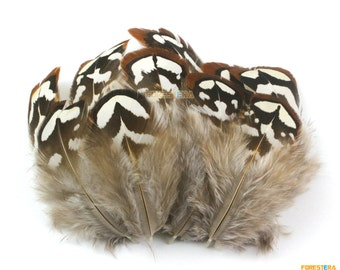 50 Pieces White Brown  Feather 4-8cm (YM34)