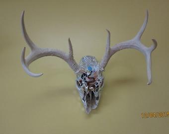Mosaic Natural Deer Skull w Antlars