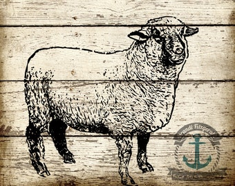 Sheep Chic | Shabby Chic Cottage Rustic Farmhouse Kitchen Decor | At Checkout, Choose Lustre Print or Gallery Wrapped Canvas
