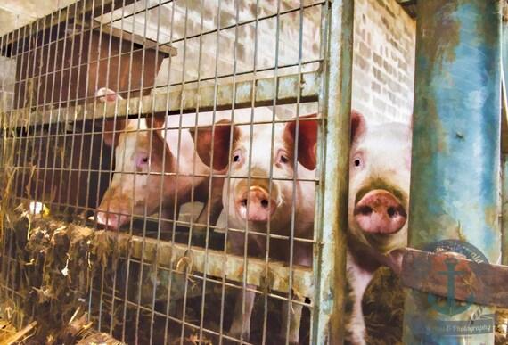 Pig Pen | 3 Little Pigs | Farmhouse Wall Decor