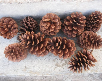 large pinecones 5 inches long lot of 10  woodlands wedding rustic wedding floral craft supplies