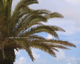 Palm Tree Photo, Nature Photography, Tropical Decor, Coastal Beach House Art, Green Landscape Photo, Home Decor Wall Art, Florida Decor