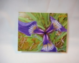 Beautiful Iris Blank Note Card with envelope 4 x 5