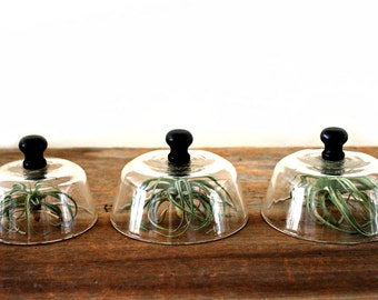 vintage glass cloches with wood knobs--set of 3, glass domes, glass display