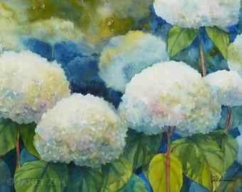 Hydrangeas Flower Print White Flower Watercolor Wall Art by Janet Zeh Original Art