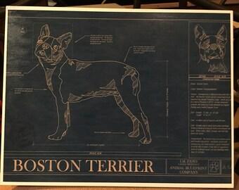 Boston Terrier Blueprint  Print Decoupaged on Wood