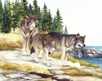 Three Wolves at Watch on Scoville Point, Isle Royale National Park Reproduction