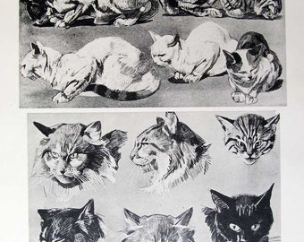 CATS! CHAT, Pl. 12, Wonderful Lithograph of Cats, c.1910, in Excellent Condition, Black, White, Gray