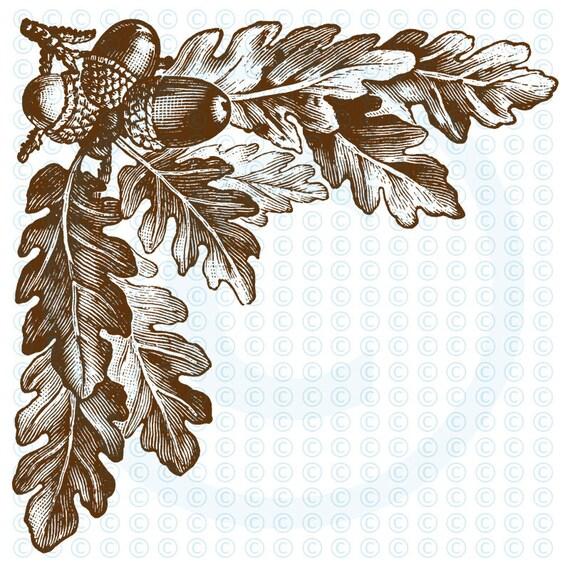 Items Similar To Acorns And Oak Leaves Corner Frame