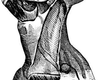 Human anatomy, Anatomical print, Medical art, Anatomy poster, Medical prints, Skull print, Anatomy, Anatomy print, Skull poster, 129