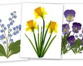 Pressed Flower Cards -set of 6 notecards -Spring Flowers