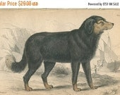 SALE Antique Original Hand Colored Steel Engraved 1843 Book Plate Print Jardine Naturalist Library Mammalia Canine Dogs #3